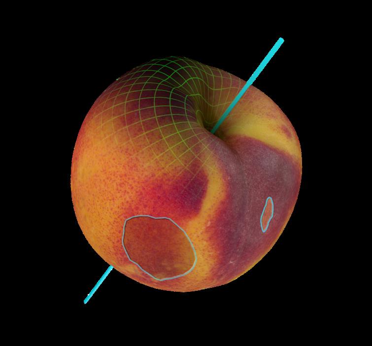 q eye smart 3d optical sorter scan result 06