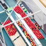 biometic food fruit optimization solutions f-trace packhouse 02