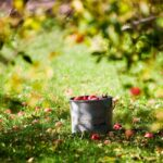 biometic food fruit optimizazion solutions f-trace orchard 01