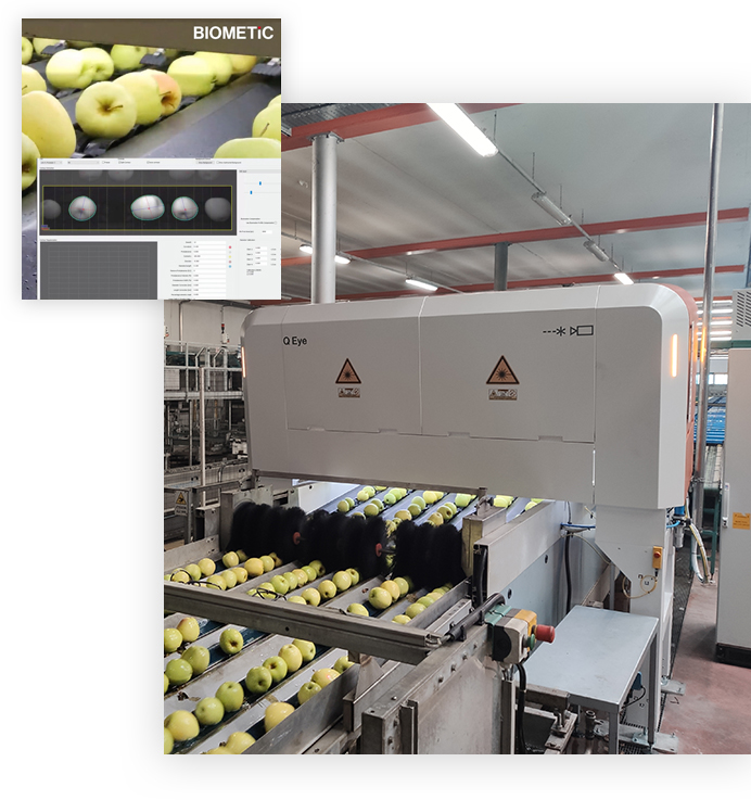 Fruit Industry Solutions | Biometic Sorting and Packaging